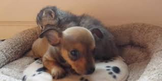 puppy and kitten cuddling.  Kitten And Puppy Kitten Cuddling