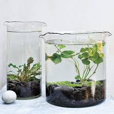 glass container water garden inspiration