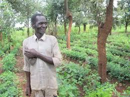 Klimaneutral leben durch von Farmern geleitete natürliche Aufforstung FMNR
