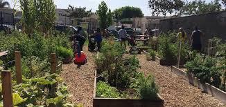 community gardening. Community Gardening M