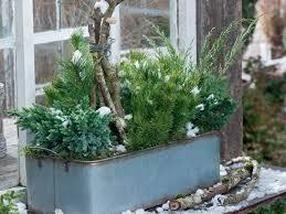 Winterharte Pflanzen Zauberhafte Weihnachtsdeko Für Außen