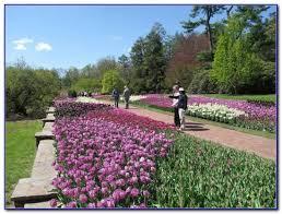 busch gardens williamsburg hotels package
