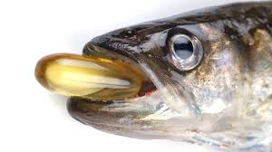 fish oil cannabinoid receptors