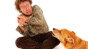 Resultado de imagem para dog phobia