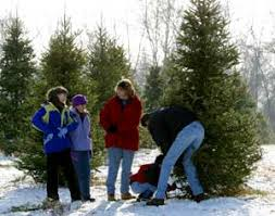 Start your own family tradition to pick your own Christmas trees at Big Tree  Plantation,