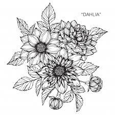 ダリアの花を描くイラスト ベクター画像 プレミアムダウンロード