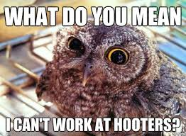 16 Funny Owl Memes - For Fum And Interesting Articles | Feafum via Relatably.com