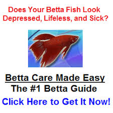 Betta Fish Chart Types Of Betta Fish