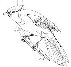 Coloring Pages Of Hummingbirds Contentparkco