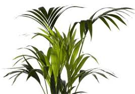 feng shui plants for office. interior landscaping with feng shui plants for office