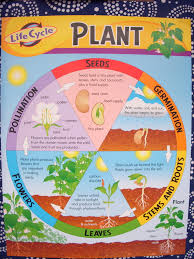2Nd Grade Science Worksheets On Plants Worksheets for all ...
