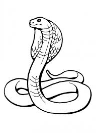 Small Picture Coloring Pages Free Printable Snake Coloring Pages For Kids Snake