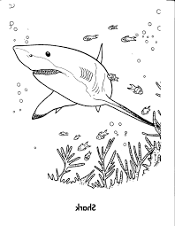 Small Picture Shark Coloring Sheets Coloring Pages Kids