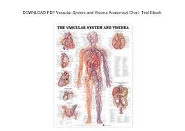 Download Pdf Vascular System And Viscera Anatomical Chart
