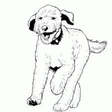 Small Picture How To Draw a Labradoodle Step by Step Pets Animals FREE