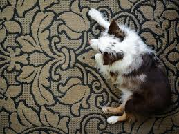 best area rugs for pets best area rugs for pet owners area rug pet stains
