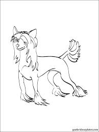 Kleurplaten Chinese Gekuifde Naakthond Gratis Kleurplaten
