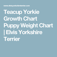 Yorkie Growth Chart In Pounds Teacup Yorkie Growth Chart Puppy Weight Chart Elvis