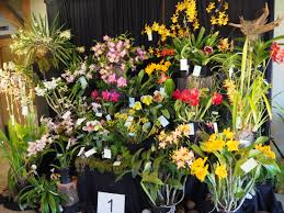 welcome in the spring season with the 9th annual orchid show at the botanical garden of the ozarks co sponsored by the orchid society of the ozarks