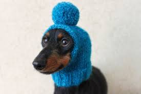 Dog Hat Knitting Pattern