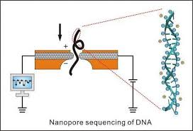 The Gene Sequencing That Everyone Can Afford In Future