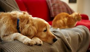 preventing separation anxiety in your pets