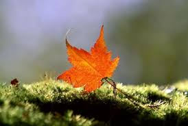 「一片葉子落下來」的圖片搜尋結果