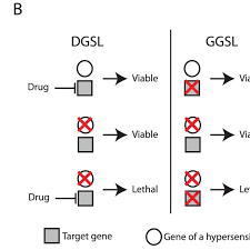 A Diagram And Concept Of Discovering Drug Target Using The