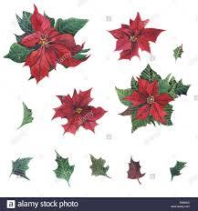 Aquarell Weihnachtsstern Weihnachten Mit Floralem Dekor