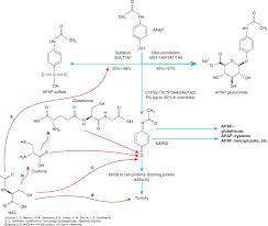 Infants Acetaminophen Concentration Change Chart Acetaminophen Goldfranks Toxicologic Emergencies 11e
