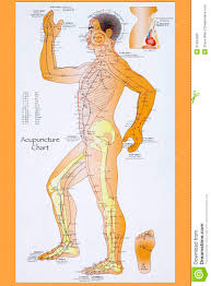 Acupuncture Meridian Chart Free Download Traditional Chinese Acupuncture Chart Editorial Stock Photo