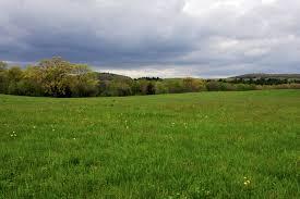 grass field. I Grass Field