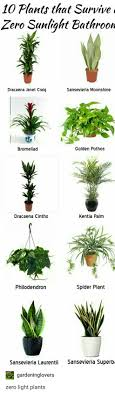 plants that survive zero sunlight bathroom