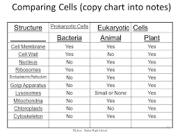 Prokaryotic And Eukaryotic Cells Chart Chapter 7 A View Of The Cell Chapter 7 1 The Discovery Of