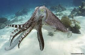<b>Camouflage</b> sheet inspired by octopus - BBC News