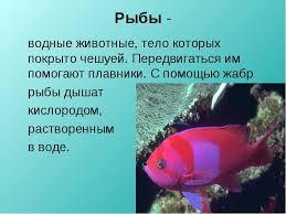 Курсовая на тему рыбалка тема охотничий и рыболовный туризм курсовая на тему рыбалка