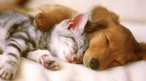 cute kittens and puppies together. Modren Cute With Cute Kittens And Puppies Together T