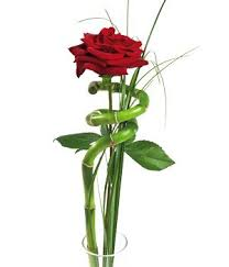 single red rose flower. Wonderful Rose Single Red Rose With Single Red Rose Flower O
