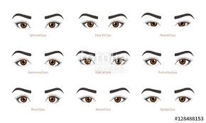 various types of woman eyes set of vector eye shapes collection of ilrations with