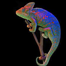 Chameleon Wallpapers Backgrounds ...