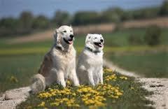 Hundegeschichten Golden Adventure