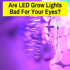 Are <b>LED</b> Grow Lights Bad For Your <b>Eyes</b>? (What You Need To Know ...