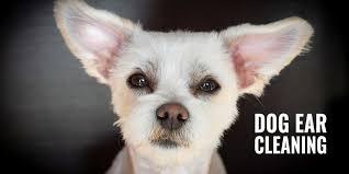 5 best dog ear cleaners w free dog ear