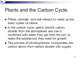 plants and the carbon cycle plants s and soil interact to make up the