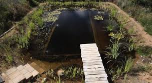 diy organic pools 7