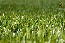 fake grass. 1,749.00 AED Fake Grass
