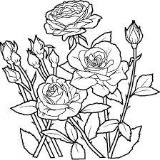 Deliziose Rose Fiori Da Stampare E Da Colorare Gratis Disegni Da