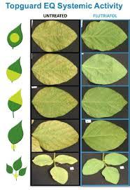 FMC Launches New Topguard EQ Fungicide Premix - CropLife & Topguard premix fungicide Adamdwight.com