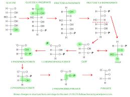 Glycolysis Chart With Enzymes Glycolysis Biochem Co Biochem Science Notes