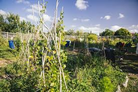 when community garden coordinator joanne heard about our humming gardens grants she put in an for money to fund the installation of a water